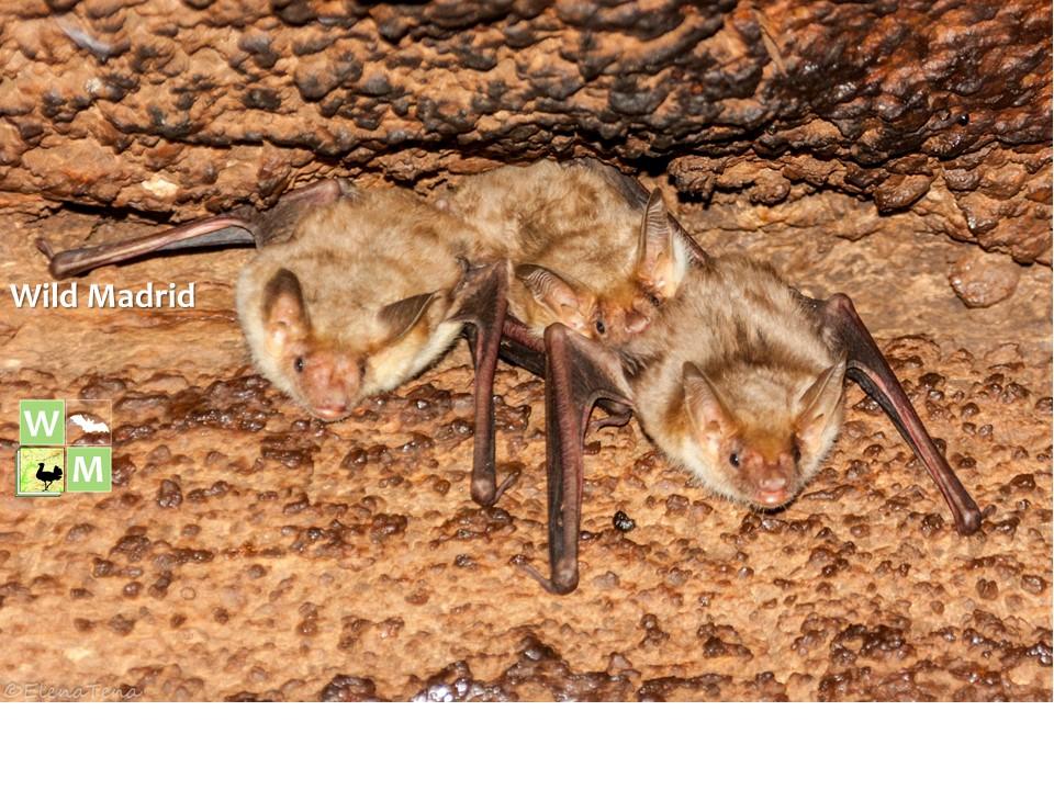 Próxima cita a favor de los murciélagos: 8 de junio en Aluche