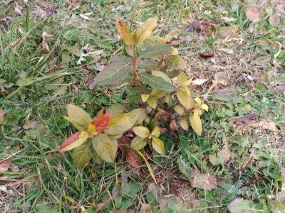 Revisión de árboles plantados y cajas-refugio, en el C.E.A «El Regajal»