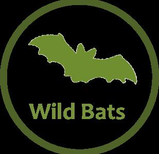Wild Bats